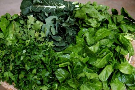 legumes folhosos